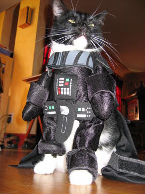 http://identidadgeek.com/wp-content/uploads/2009/06/darth-kitty.jpg
