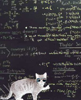 schrodinger-cat-blackboard