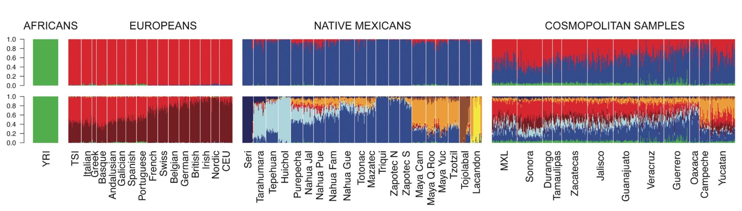 distribucion-genetica-mexicana