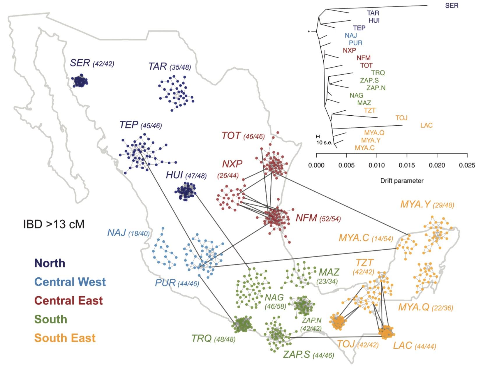 mapa-genetico-indigenas-mexico